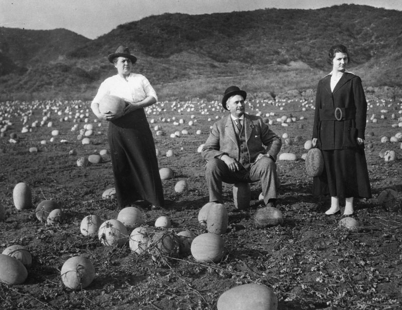 People never tired of holding or sitting on their casabas in a field at the corner of Sunset and Harper in 1918. (Photo courtesy of Los Angeles Public Library Photo Collection)