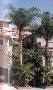 Shelley Winters and Monroe shared at apartment at 8573 Holloway Drive in November 1951.